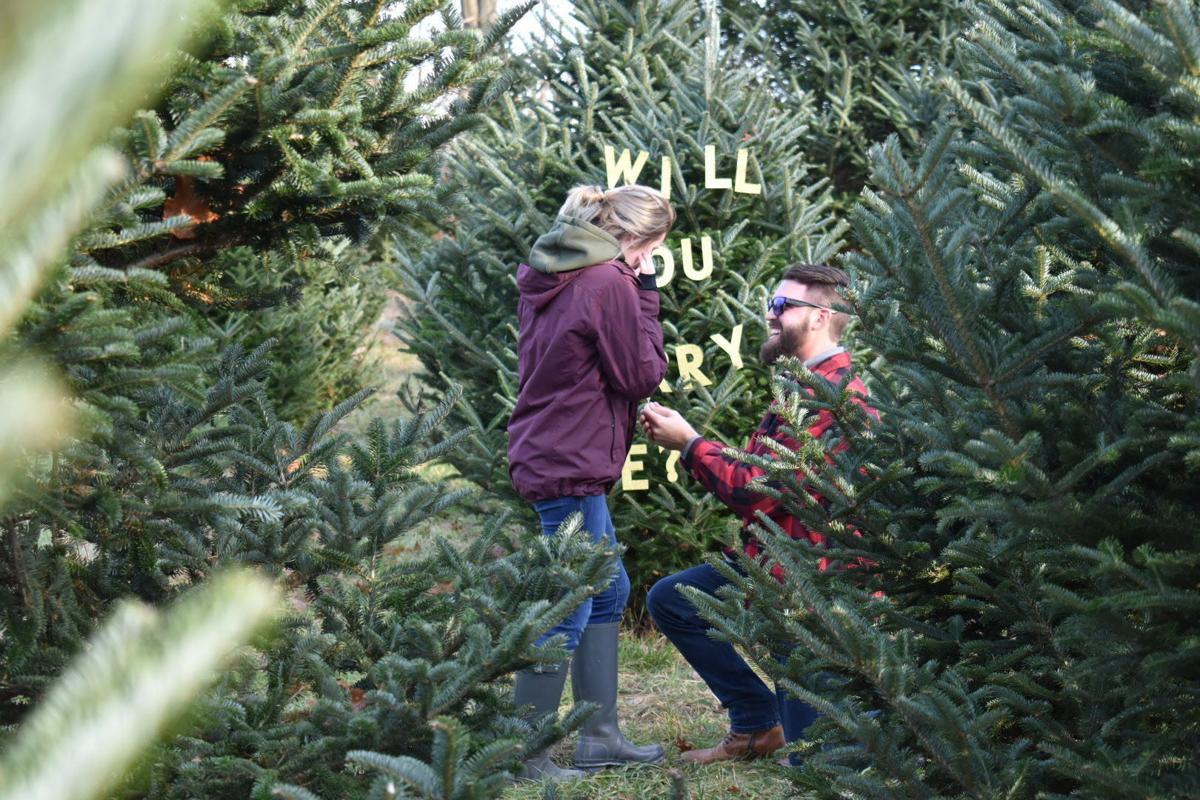 Christmas tree farm proposal
