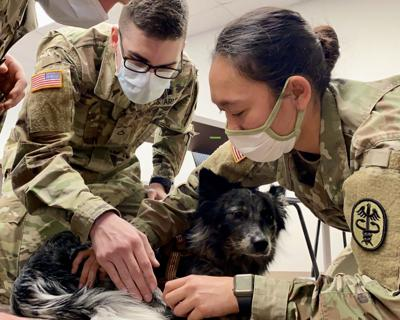 BACH Soldiers learn lifesaving skills for military working dogs