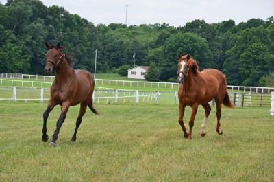 Old Friends at Kentucky Downs closing