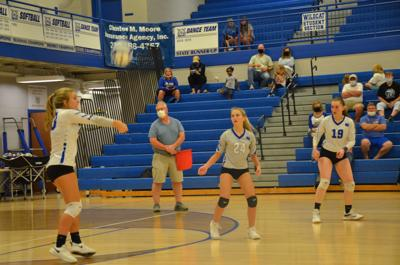 Volley Cats Photo 1
