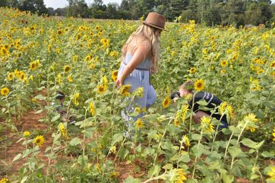 Ruby Branch Farms offers sunflower patch for photography opportunities