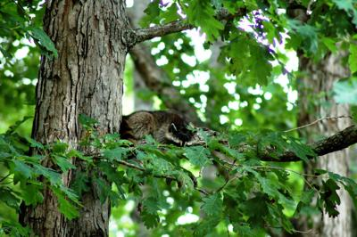 IN NATURE>> Take time to enjoy a nap