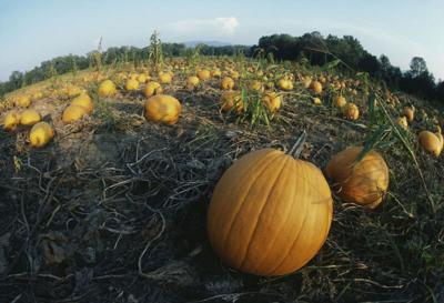Corn mazes and pumpkin patches virginia is for lovers.