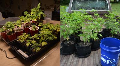 Pot plants seized from Chesterfield man's home