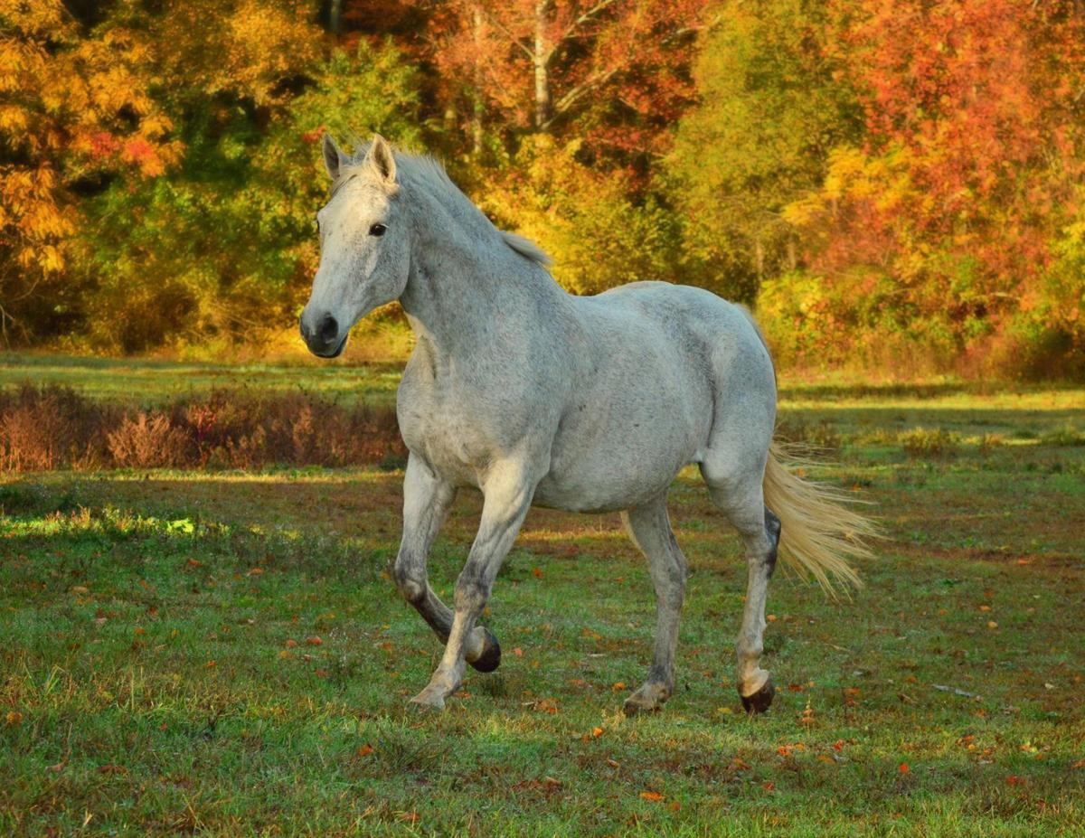 Hazelwild Farm Quarantined After Virus Kills Horse Farm