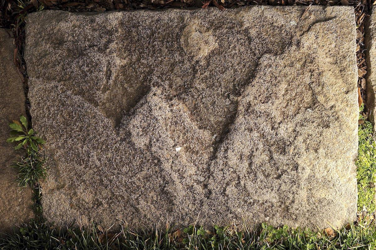 Geologist's visit to Belmont in Stafford leads to discovery of dinosaur footprints