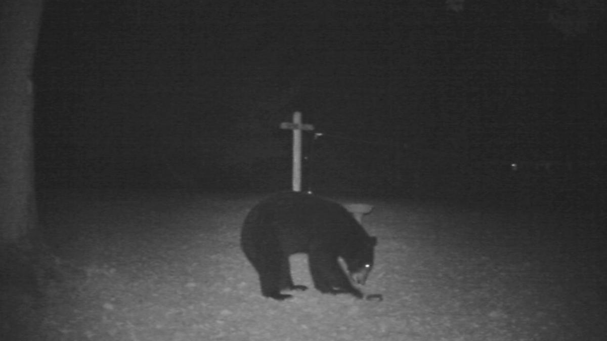 cathy dyson bear in mind that some backyard visitors are scary