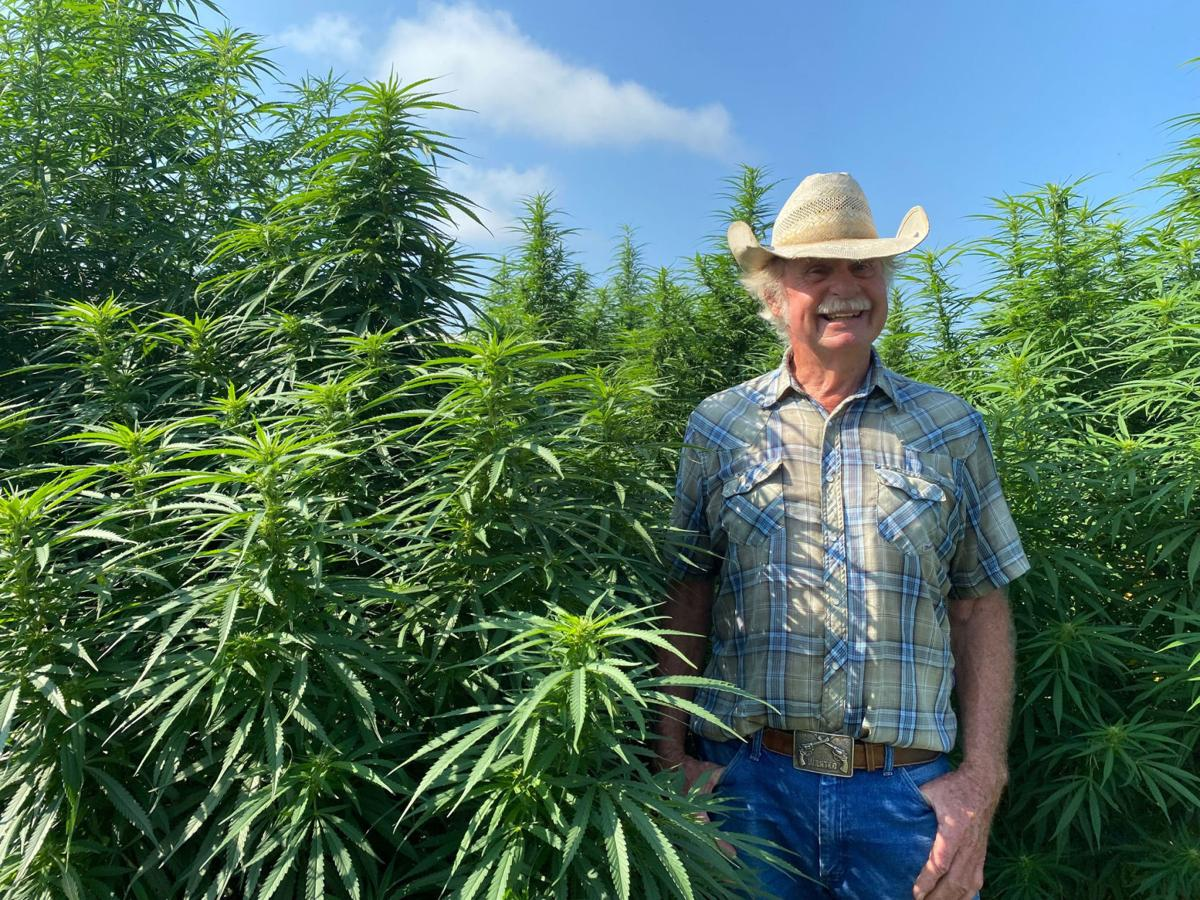 Cannabis (copy)