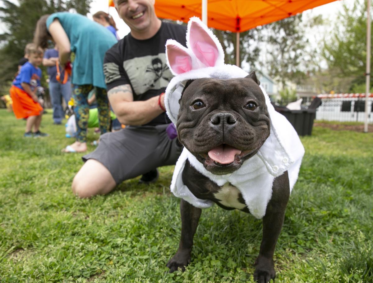 Dog Easter Egg Hunt