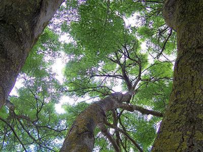 PHOTO: Canopy