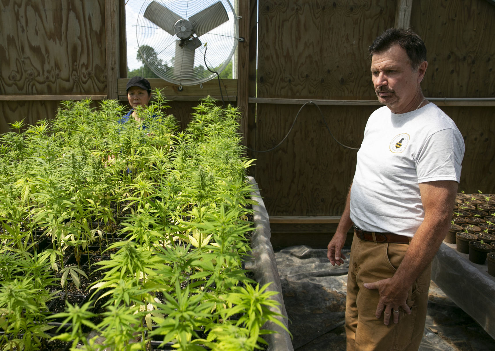 Caroline Hemp Farm Hopes To Cash In On Change In State Law Local News Fredericksburg Com