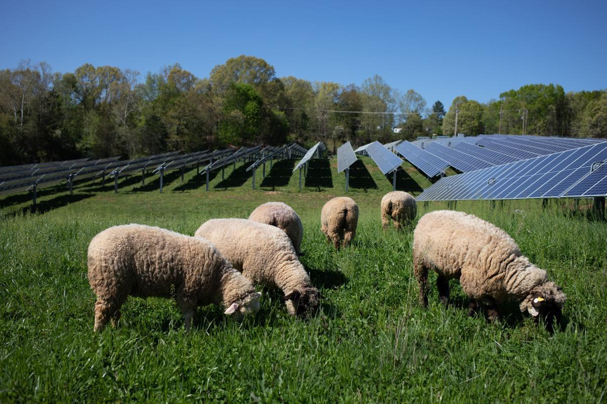 Sheep Farm_19.jpg