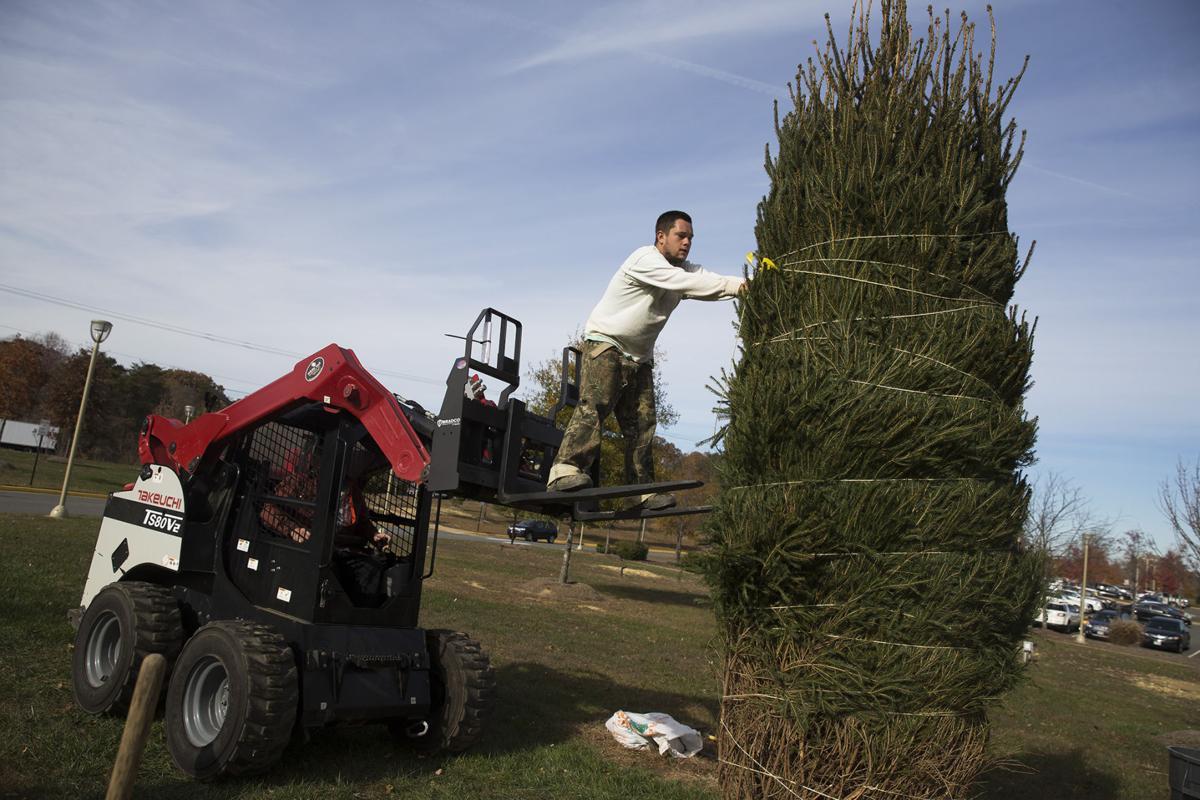 Stafford Hospital plants a tree | Local | fredericksburg.com