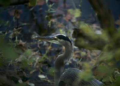 Cossey Pond