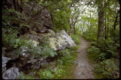 PHOTO: Shenandoah National Park