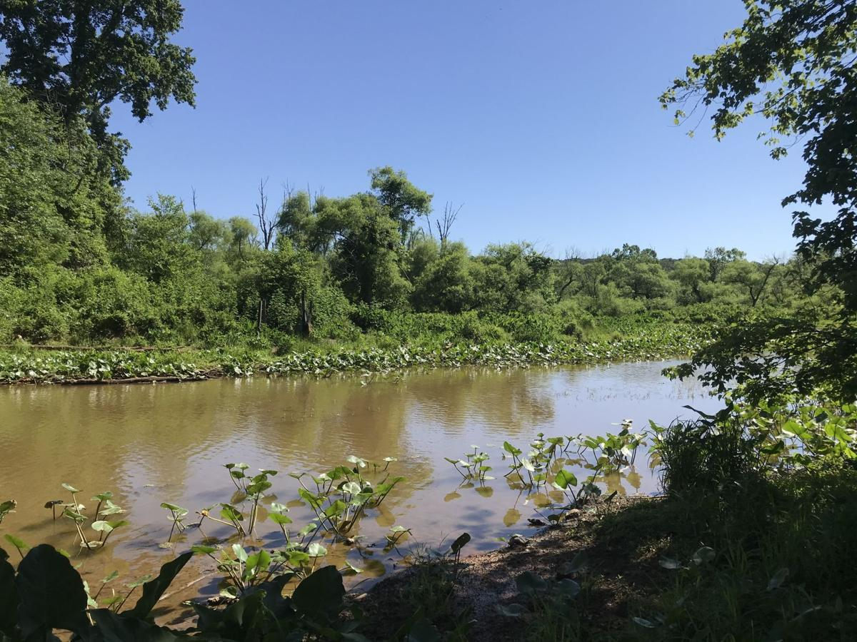 New tract of Potomac Creek Heronry