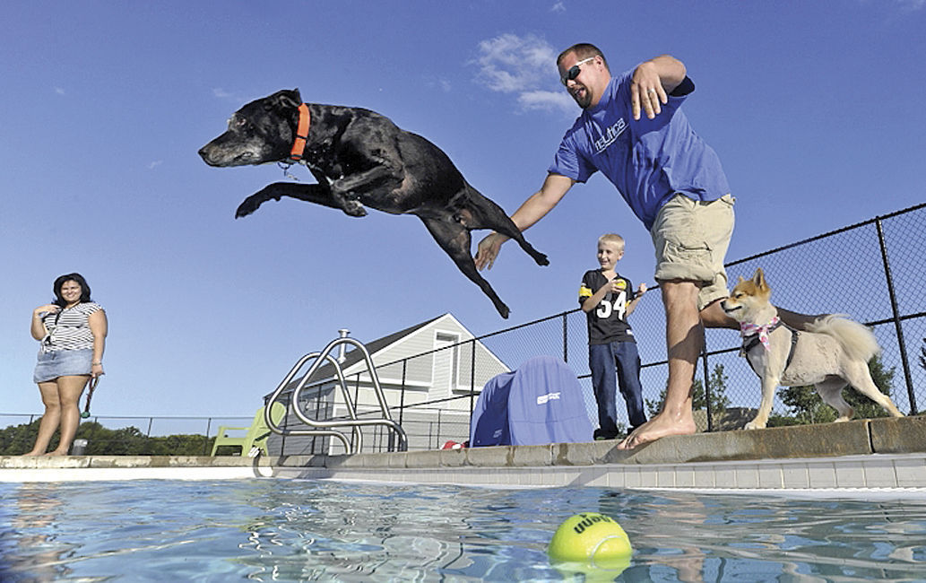 Does your dog need a swim pools allowing pups this week local for Dixon park swimming pool fredericksburg va