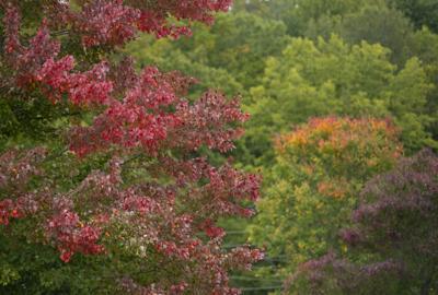 Fall Color Peak 01