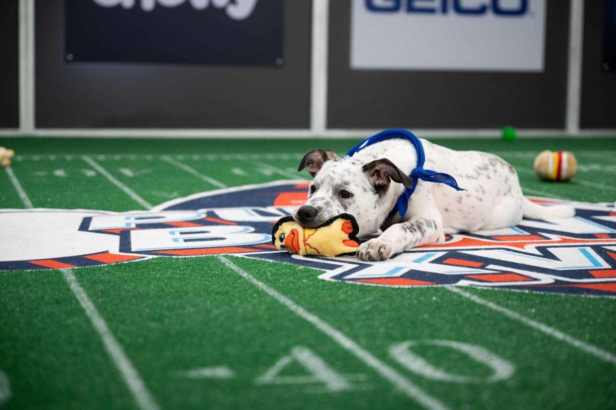 Animal Planet's pup-ular Puppy Bowl to go on as planned