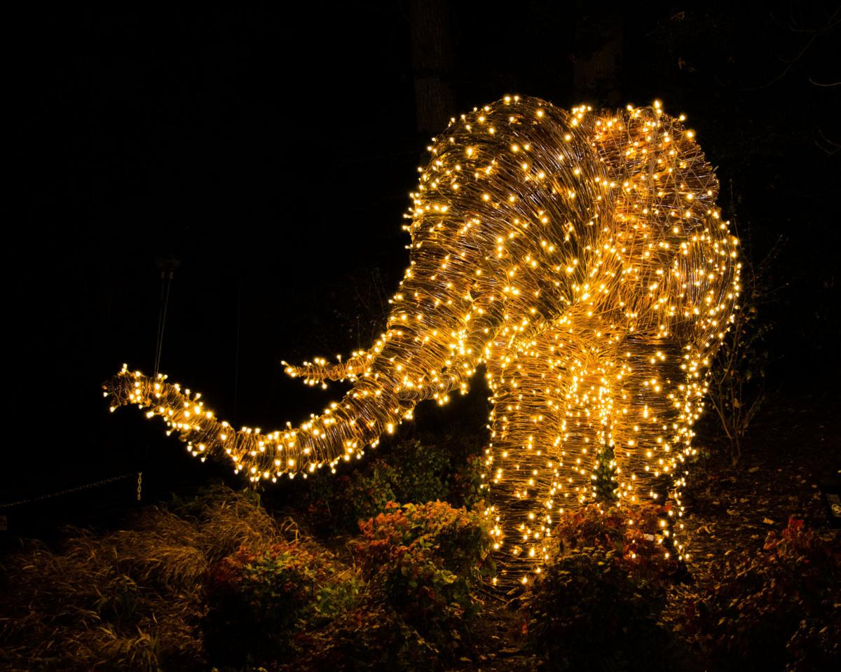 Zoo Lights at the National Zoo