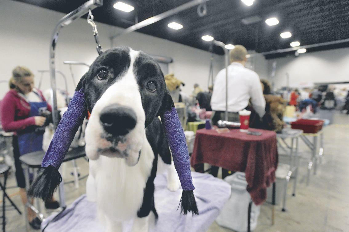 Celebrate VA Cluster Dog Show