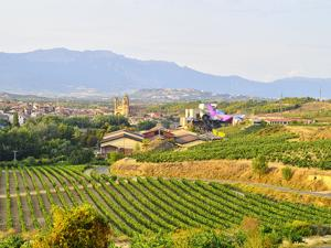 Rioja Wine - Spain
