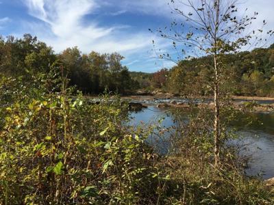 PHOTO: Rappahannock underbrush