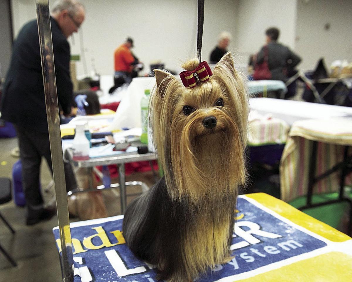 Celebrate VA Dog Show