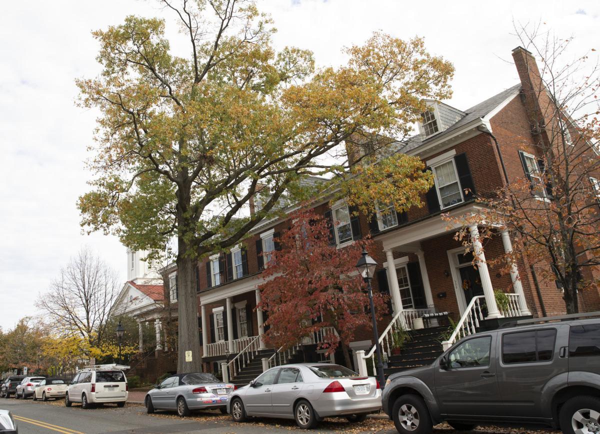Presbyterian Tree