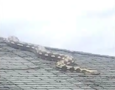 'It's moving and it's huge!': An 18-foot-long snake on a roof horrified a Detroit neighborhood