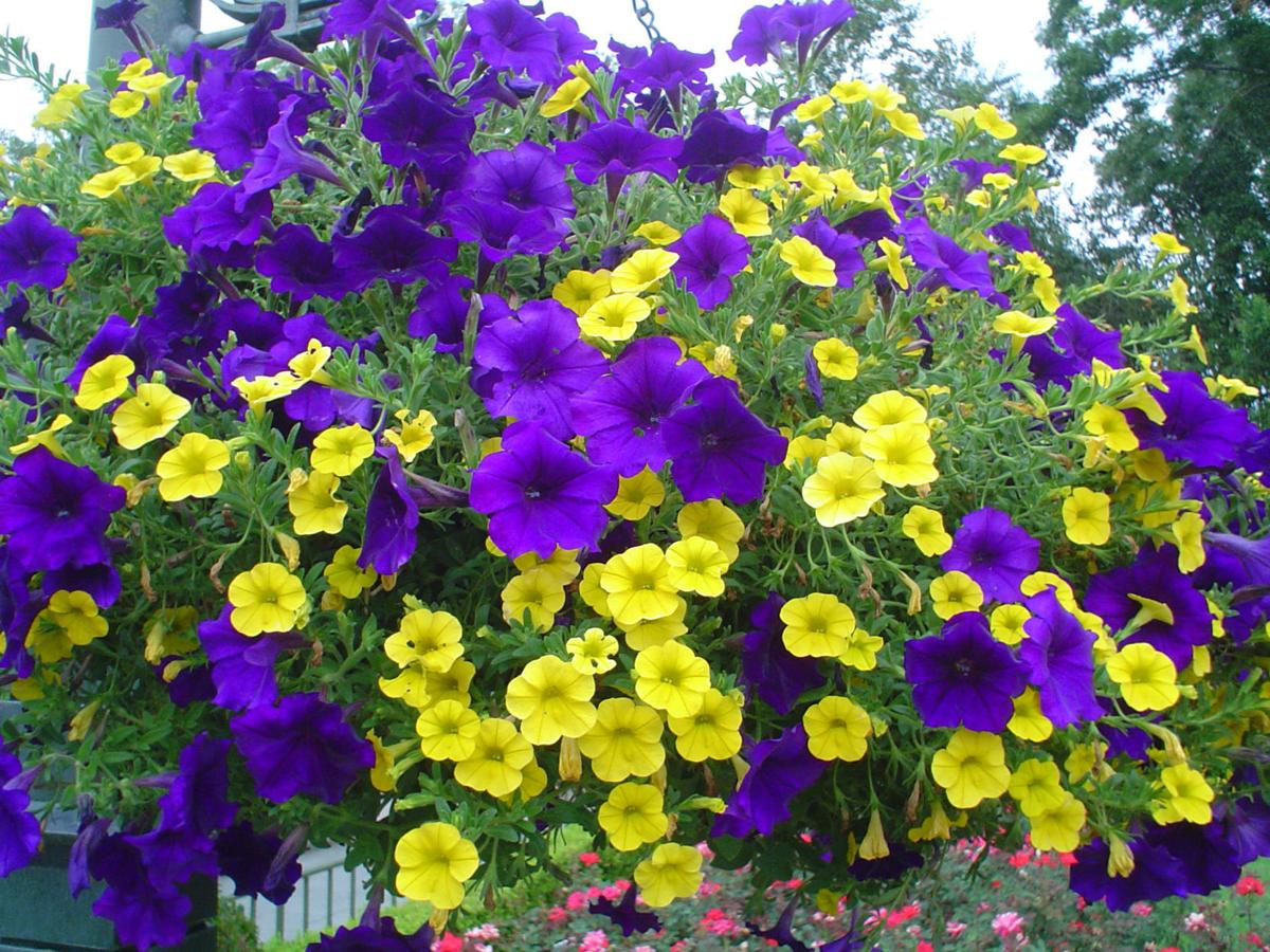 Yardsmart Celebrate Passion This Spring With Purple Plants House