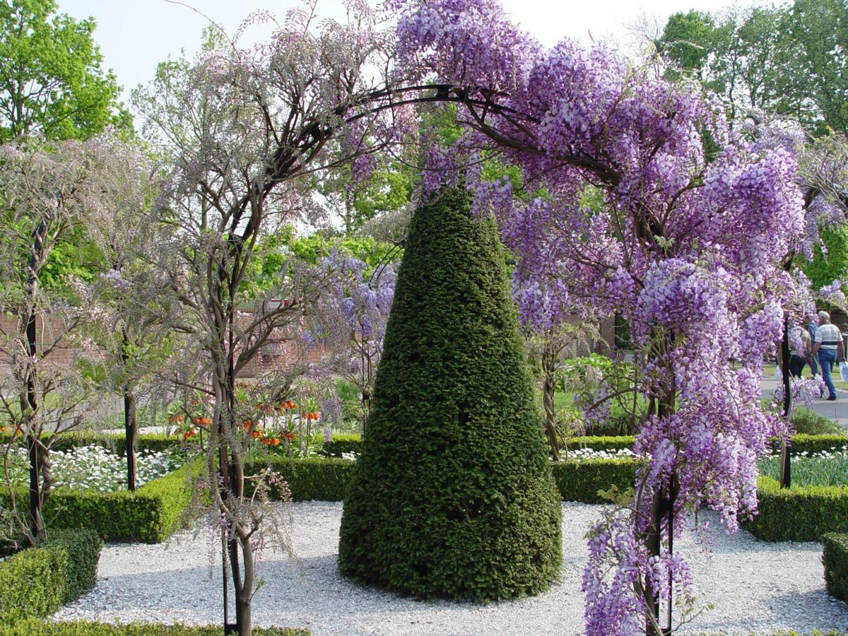 How To Choose The Right Wisteria For Your Garden House And Home
