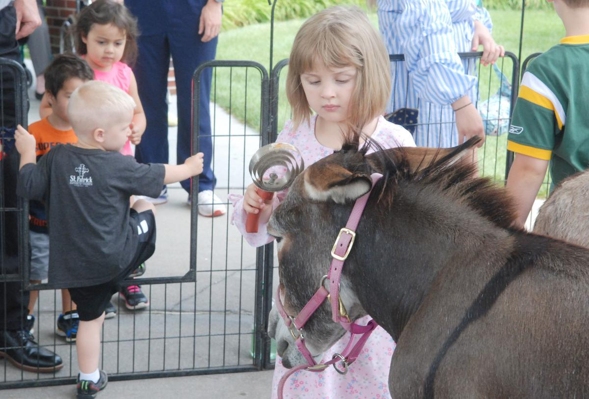 Little girl brushing donkey