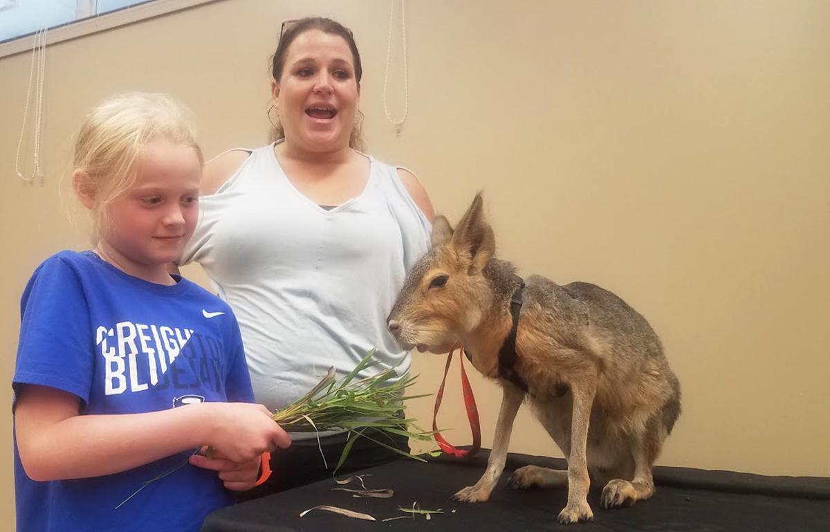 Wildlife Encounters girl feeding animal