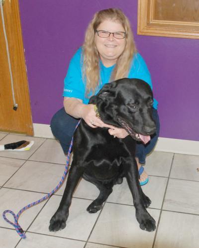 FurEver Home woman and Labrador retriever