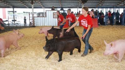 FRE hog show Do Co Fair 2020.jpg