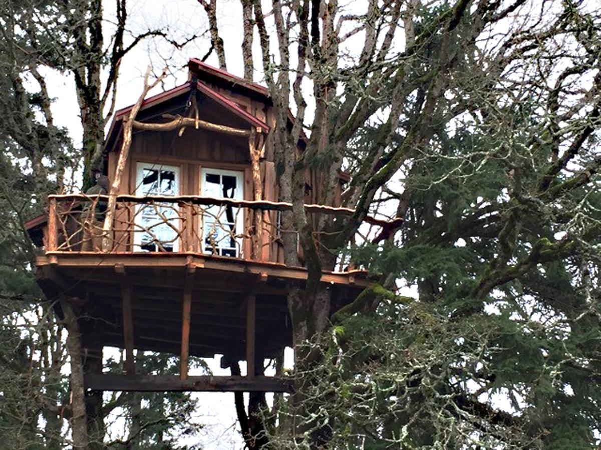 Com Treehouse Www Animal Planet Html on
