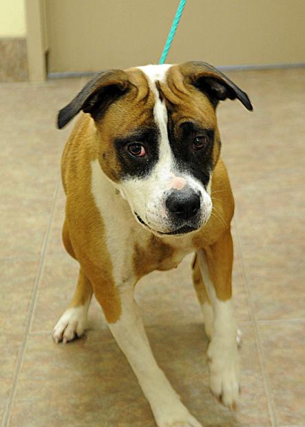 Pets of the Week for Nov  2 | Pets | fremonttribune com