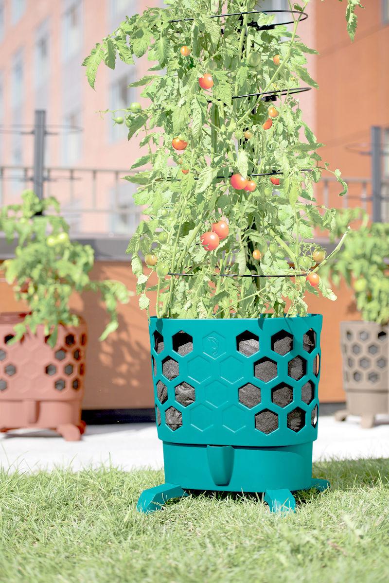042017_A5_tomato