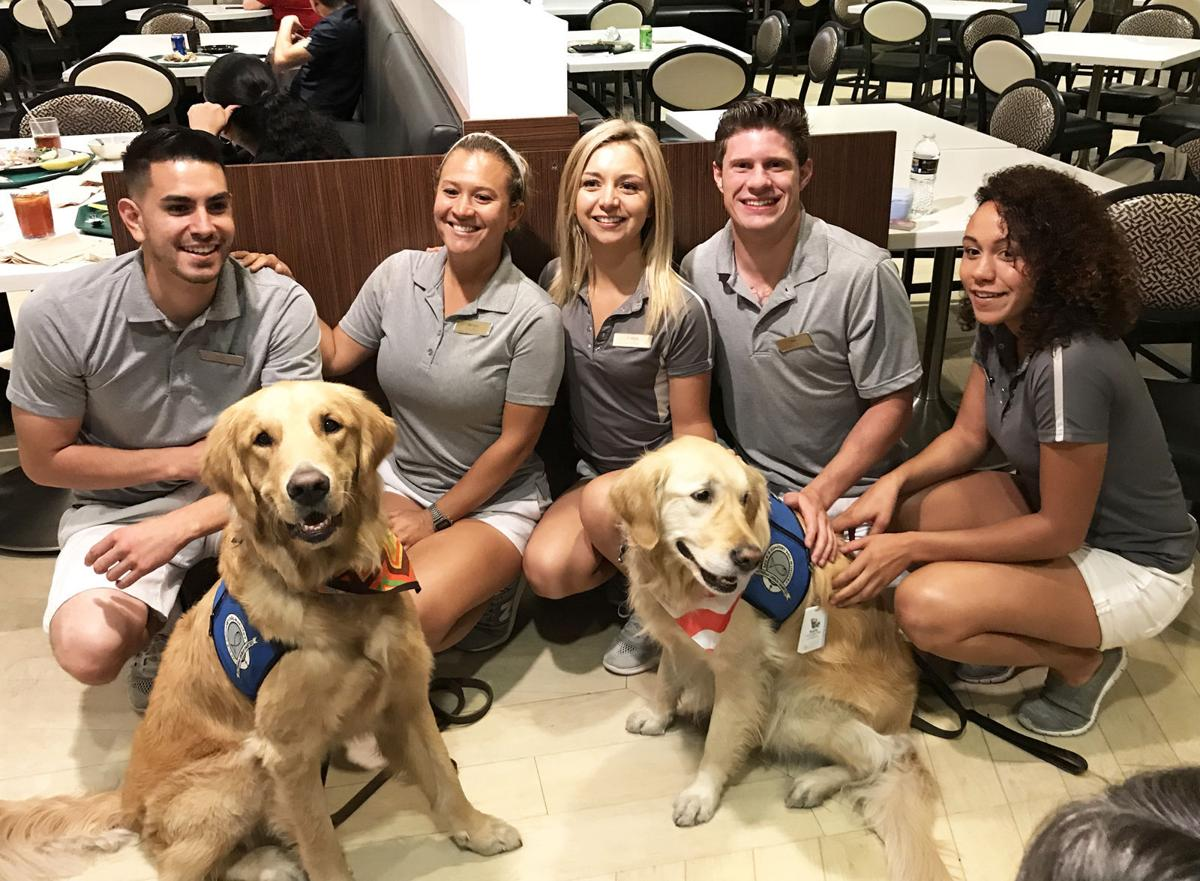 Hotel employees and Comfort Dogs