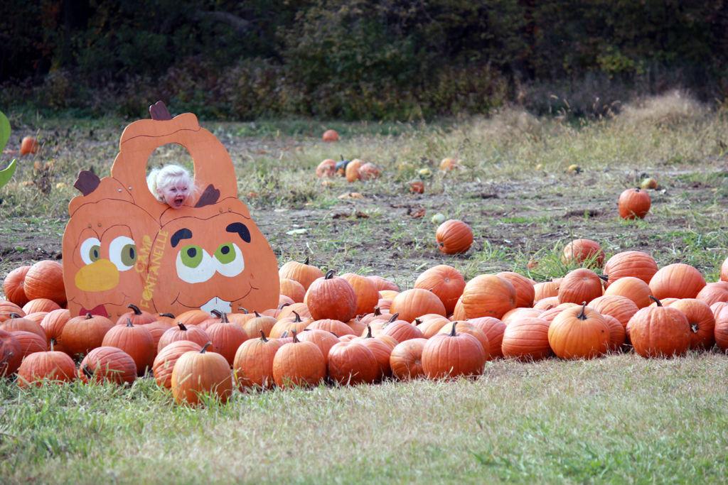 PumpkinPatch_02.jpg
