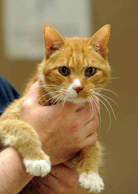 Pets of the Week for May 24 | Pets | fremonttribune com