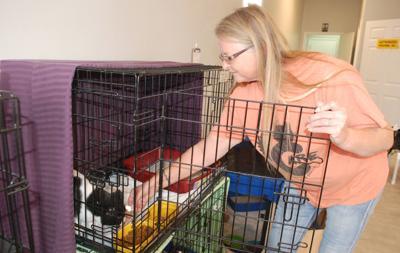 Woman feeding cat