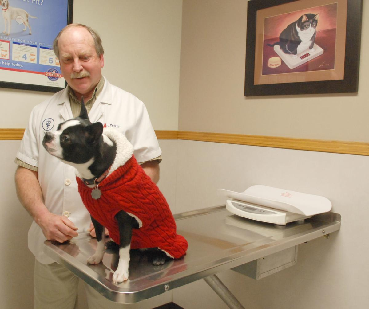 Veterinarian, groups list winter safety tips for pets | Pets