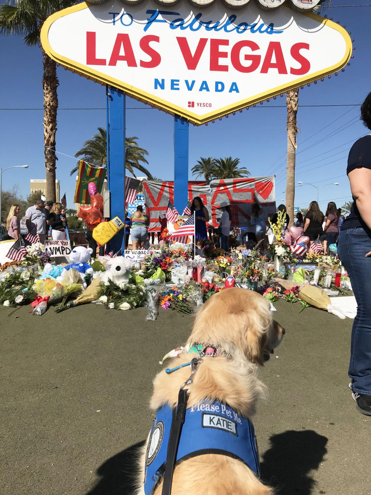 Katie the Comfort Dog by Las Vegas sign