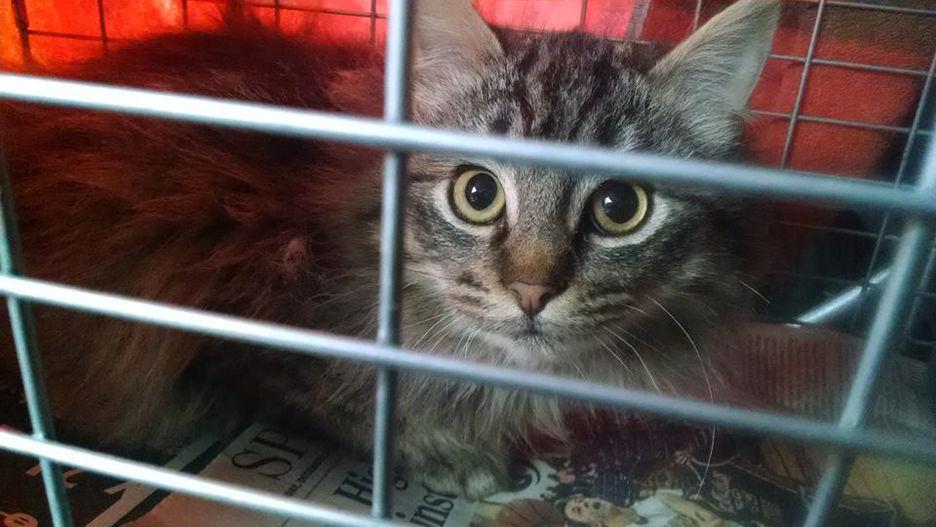 CARE-Catz Rescue Effort