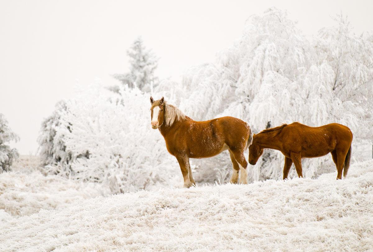 Horses stand in the snow in Keith County