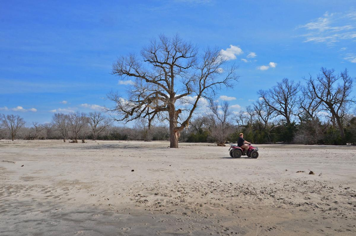 Sandy pasture