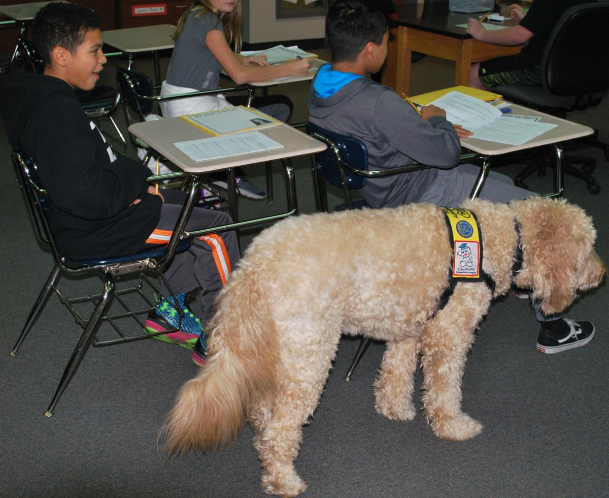 Therapy dogs making difference in FPS District | Education