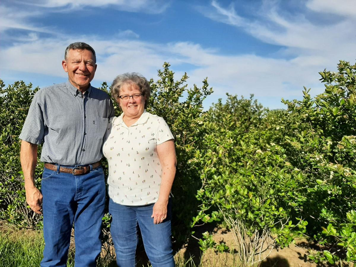 Dale and Nancy Hilgenkamp to left of aronia berry bushes
